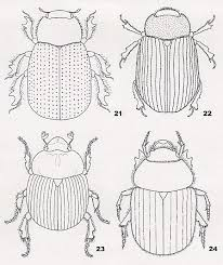 Small Picture Best 25 Beetles ideas on Pinterest Beetle insect Insects and Bugs