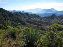Cava Costa Rica/Panama