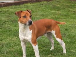 top hunting dogs breeds