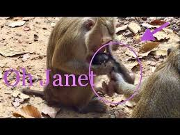 Pin on monkey lifestyle
