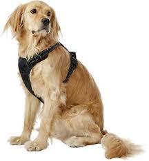 Rabbitgoo Dog Harness Size Chart Rabbitgoo No Pull Dog Harness Black Small