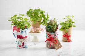 diy gift a potted plant
