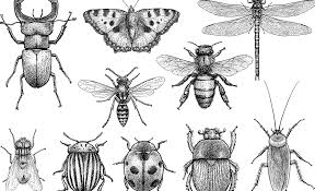 Is an 'insect apocalypse' actually happening? | Greenbiz