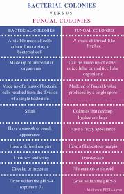 Difference Between Bacterial And Fungal Colonies Pediaa Com