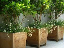 wooden large container pots see