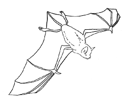 Small Picture Bat Coloring Pages 2 4155 Cartoon Pagejpg Coloring Page mosatt