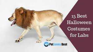 Ups Dog Costume Size Chart The 15 Best Halloween Costumes For Labs In 2019 Pet Loves Best