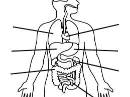 Human Body Parts Outline Drawing Blank Female Body Diagram Lovely