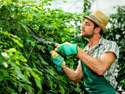 questions for hire a gardener fresh tham