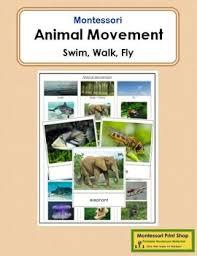 Wildlife Movement Chart Animal Movement Swim Walk Fly Animal Movement Animals