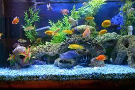 fish tank lighting ideas. Innovative Aquarium Design Ideas Fish Tank Lighting N
