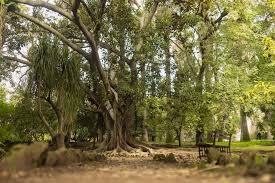 lisbon tropical botanical garden