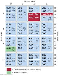 Universal Genetic Code Chart All Living Things Have