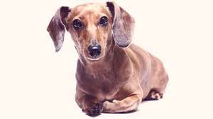 dog epilepsy 101 symptoms and causes