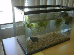 fish for office. So, I\u0027ve Heard That Betta Fish Were The Most Easiest To Look After. I Got A Blue One From Pet Store (Pet Habitat) In Metrotown Mall. For Office H