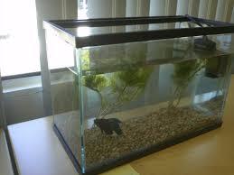 office desk fish tank. Office Fish. So, I\\u0027ve Heard That Betta Fish Were The Most Easiest Desk Tank