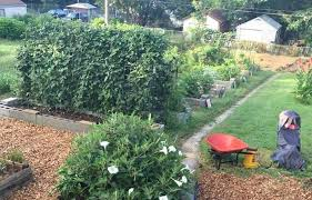 calls for volunteers to plant or deliver produce usually draw more than a dozen people at a time to the feed the people garden seen here in a 2018 photo