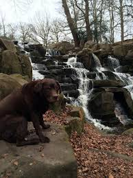 This dog pretty much has our dream job - BT