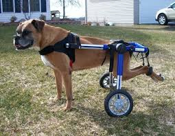 revealed the 4 best dog wheelchairs mhl handicap dogs wheelchairs