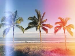 palm trees tumblr vertical. SummerSurfSkate Palm Trees Tumblr Vertical