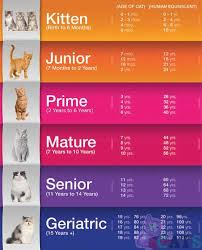 Cat Years Chart Calculator How Old Is My Cat In Cat Years Cat Ages Cat Age Chart