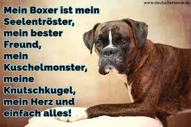 Boxer Zitate Und Sprüche