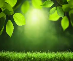 summer background green summer background gallery yopriceville high quality