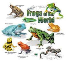Amphibian Tshirts Frogs Toads Salamander Tee Shirt