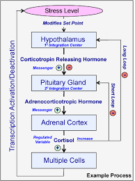 Introduction To Endocrine Communication Human Physiology