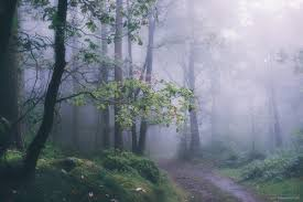 nature backgrounds tumblr. Background, Beautiful, Foggy, Forest, Gree, Nature, Nature Photography, Photography Backgrounds Tumblr