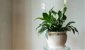 house plants for shade and low light