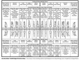 Tooth Meridian Chart Dentistry Health Tooth Meridian Chart