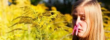 pollen ile ilgili görsel sonucu