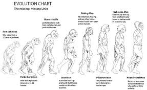 Evolution Of Man Chart Chart On Evolution Of Man Best Picture Of Chart Anyimage Org