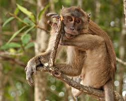 Phuket: Krabi tourists warned, <b>beware of monkeys</b>