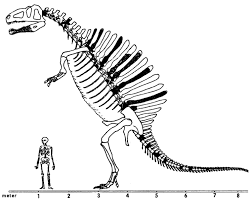 Spinosaurus Kleurplaat Spinosaurus Coloring Pages To Download And