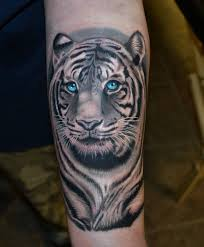 white tiger with blue eyes tattoo. Brilliant Eyes White Tiger With Blue Eyes Tattoo Inside Tiger With Blue Eyes Pinterest