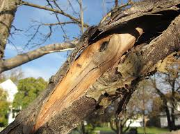 how to tell if your tree is diseased