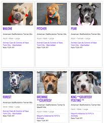 Types Of Pitbulls Chart Why Are There So Many Pit Bulls In Shelters Barkpost
