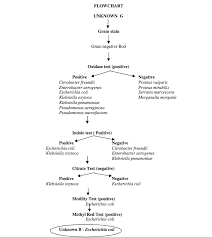 Microbiology Unknown Test Flow Chart Solved When Scientific Try To Identify And Unknown Bacter