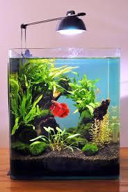 Decorative Betta Fish Bowls 60 Gallon Fish Tank Stand Ideas For Your Aquarium Fish tanks 13