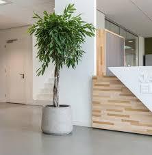 Piante da appartamento da coltivare all' interno! Piante Da Interno Verdi Ingrosso Piante Verdi Officina Verde Design