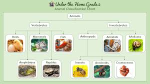 Raccoon Classification Chart Under The Home Online Homeschool Curriculum Science Lesson