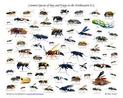 Wasp Identification Chart Images Of Different Types Of Bees Types Of Honey Bees