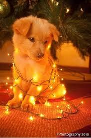 cute christmas puppies. Simple Cute Cute Christmas Puppy Inside Puppies U