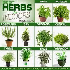 indoor herb garden ideas. Diy-indoor-herb-garden-ideas Indoor Herb Garden Ideas