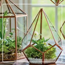 indoor gardening. Contemporary Gardening Terrariums U0026 Plants On Indoor Gardening O