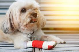 are all dog tumors cancerous here s