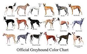 Dog Color Chart