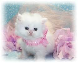 صور قطط جد جميلة images?q=tbn:ANd9GcT